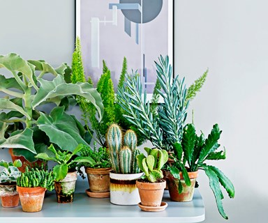 Urban jungle: Guide to the best indoor plants