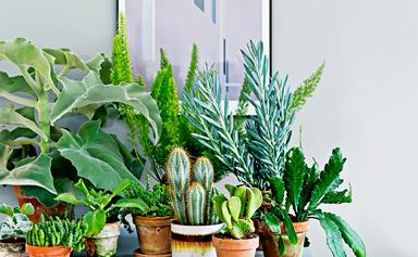 The best indoor plants for Australian homes