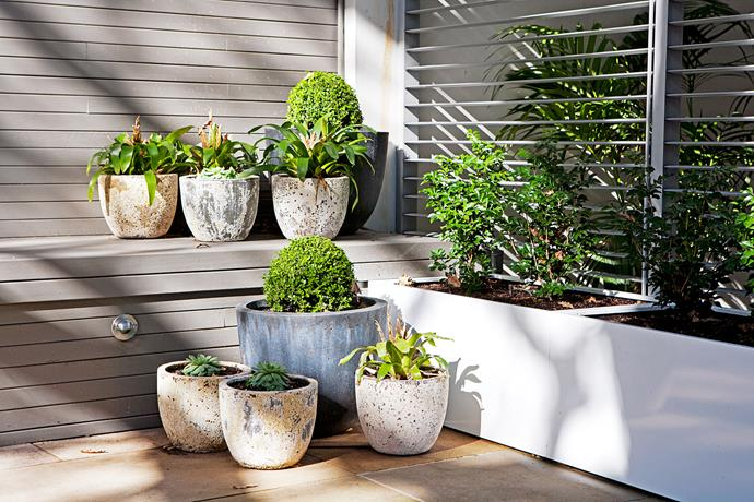 Different textures of pots have been used to make each pot stand out from its neighbour.