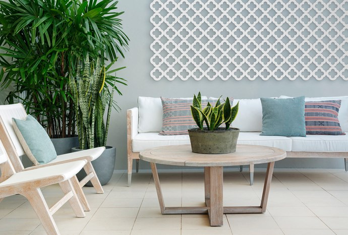 """Easy-care plants forge a link between indoors and out. On the rear terrace, plants with elongated vertical leaves, such as mother-in-law's tongue (*Sansevieria*) and lady palm (*Rhapis excelsa*), have sculptural value.   Reef **sofa**, **table** and **chairs**, all from [Globe West](http://www.globewest.com.au/?utm_campaign=supplier/