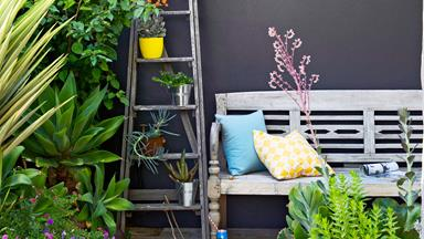 The top 18 potted plants for your garden