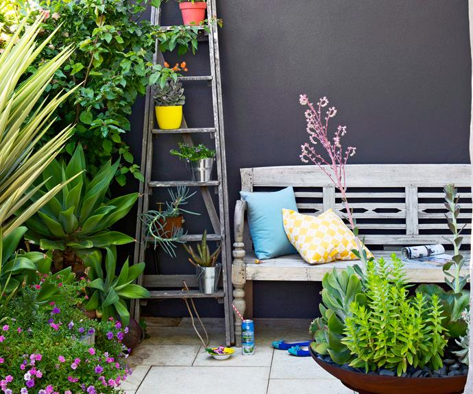 "> Discover the [top-performing potted plants for your garden.](http://www.homestolove.com.au/top-performing-potted-plants-for-your-garden-2183|target=""_blank"")"