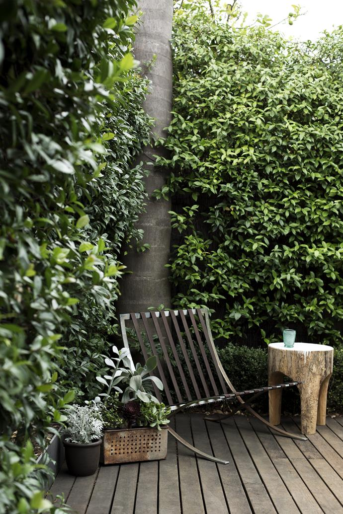 Walls of greenery create a quiet, protected nook in the rear courtyard.