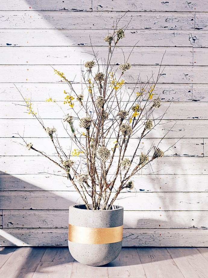 """The rustic theme flows throughout, with a neutral colour palette and a focus on native flora, natural materials and contrasting timbers. Egg concrete **pot** with Gold band from [Koskela](http://www.koskela.com.au/?utm_campaign=supplier/ target=""""_blank""""), holding willow, wattle and Geraldton wax floral **tree arrangement** from [Wild Blossom Flowers](http://wildblossom.com.au/?utm_campaign=supplier/ target=""""_blank"""")."""