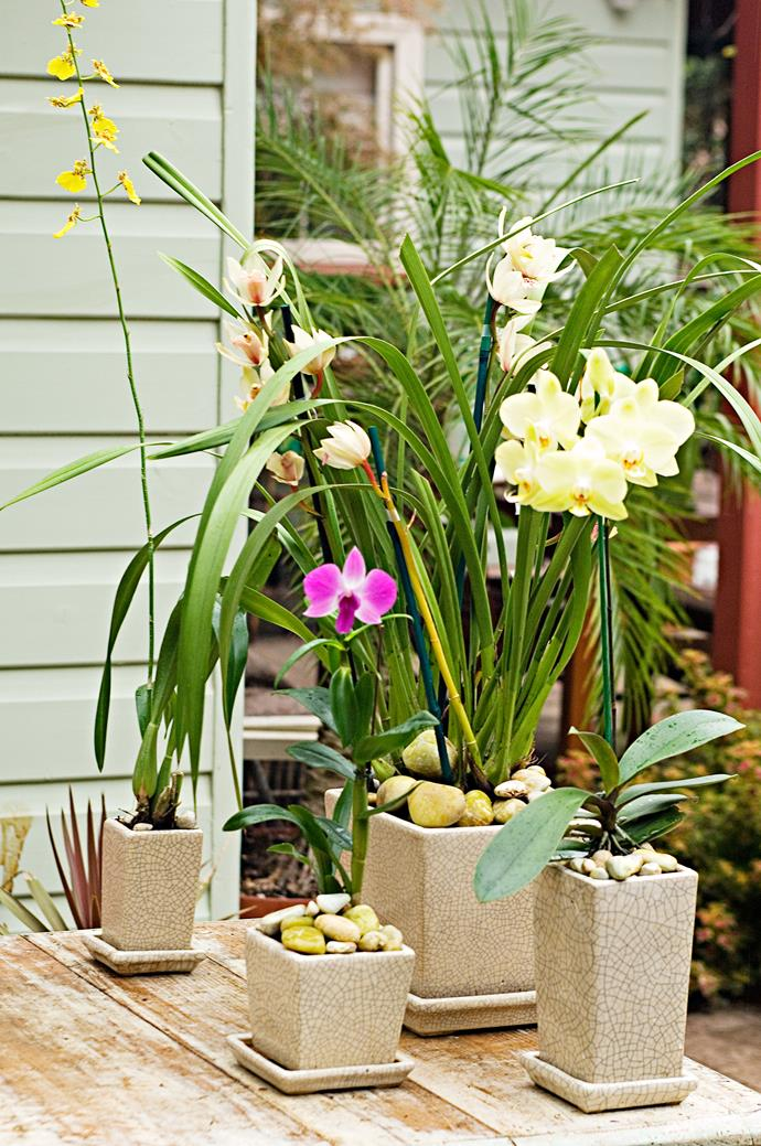 **Step 5** Once the orchid has flowered, cut off the old flowering stem at the base, then switch to the 'growing' fertiliser instead of the 'flowering' type.
