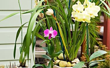 How to care for and pot an orchid