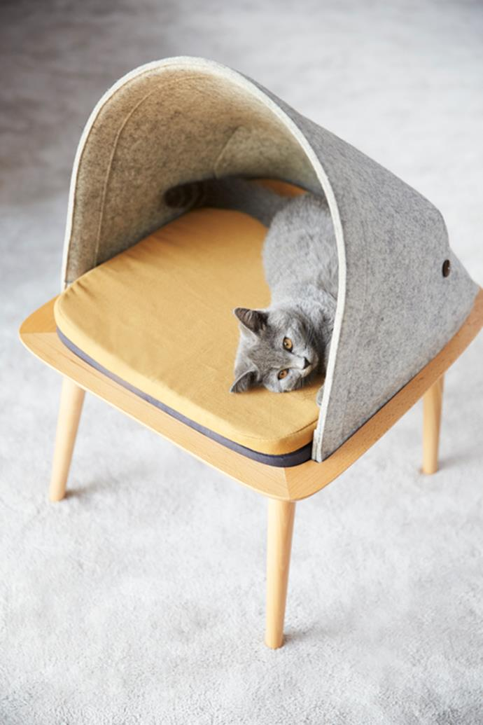The Bed offers your cat a vantage point. And because you only want the best, it's made of high-quality and elegant materials: solid wood, 100% wool felt and comfortable bedding. Photo: supplied