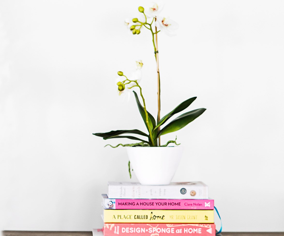 "[> Click here to find out how NOT to kill your orchid.](http://www.homestolove.com.au/how-not-to-kill-your-orchid-2312|target=""_blank"")"