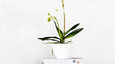 Treat 'em mean: How not to kill your orchid