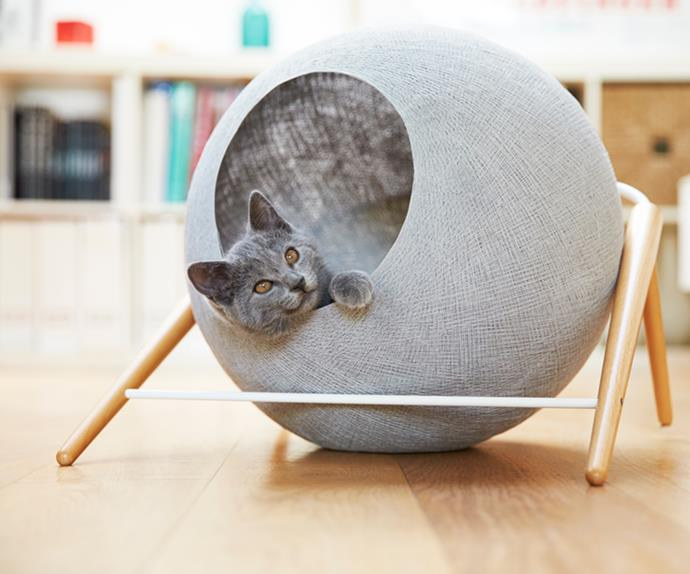 Cat designer furniture