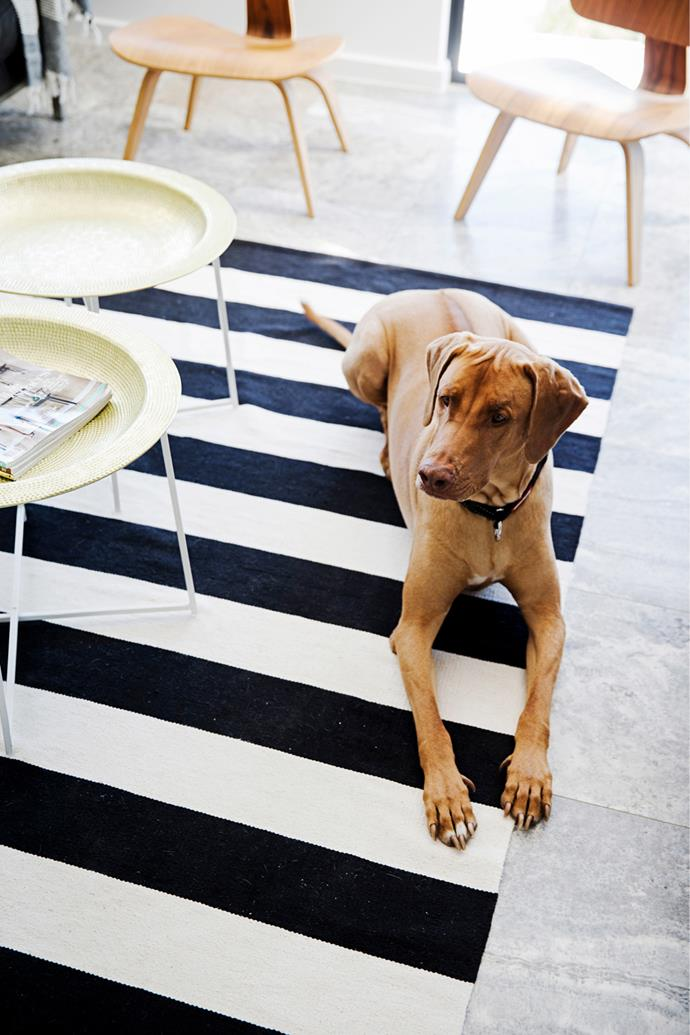 Deryn only ever buys inexpensive rugs as her dog Rooi loves to chill out on them.