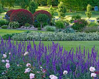 A country garden with landscaped lawns and garden beds.