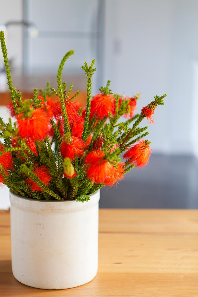 The flame-coloured flowers of swamp bottlebrush (*Beaufortia sparsa*) make a striking centrepiece.