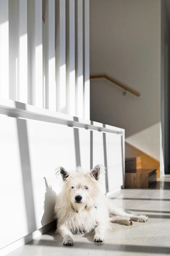 Barkly, an eight-year-old rescue dog, basks contentedly in a sunny spot at the foot of the stairs.