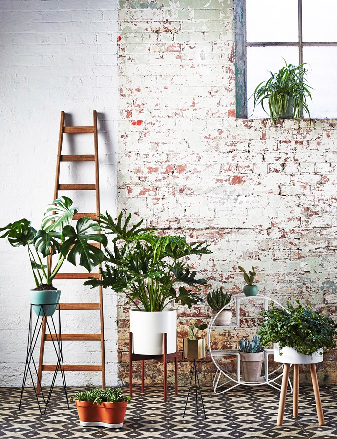 "Use interesting pots and stands at different heights to build a dynamic plant display, indoors or out. **FROM LEFT** Calypso stoneware **pot**, $95, and Harlequin steel **stand**, $190, [Ivy Muse](http://ivymuse.com.au//?utm_campaign=supplier/|target=""_blank""). Teak **ladder**, $299, [House of Orange](http://houseoforange.com.au/?utm_campaign=supplier/