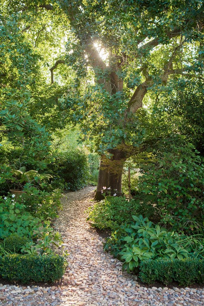 Azaleas, hellebores and bulbs surround the beloved oak.