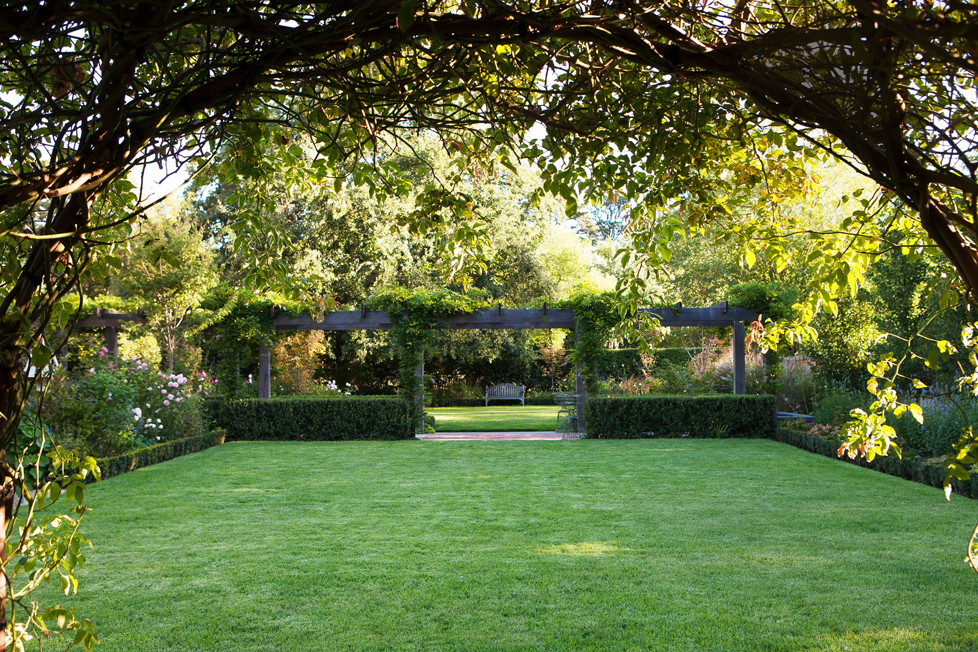 "A climbing rose frames the view of the magnificent 20m-long pergola in this [stately Ballarat garden](http://www.homestolove.com.au/a-grand-garden-reinvented-for-the-21st-century-2665|target=""_blank""), which serves as a partition between the oval and square lawn 'rooms'. Draped with wisteria and hedged with *Escallonia iveyi*, the pergola is a stunning sight when the wisteria is in flower. Photo: Simon Griffiths / *Australian House & Garden*"