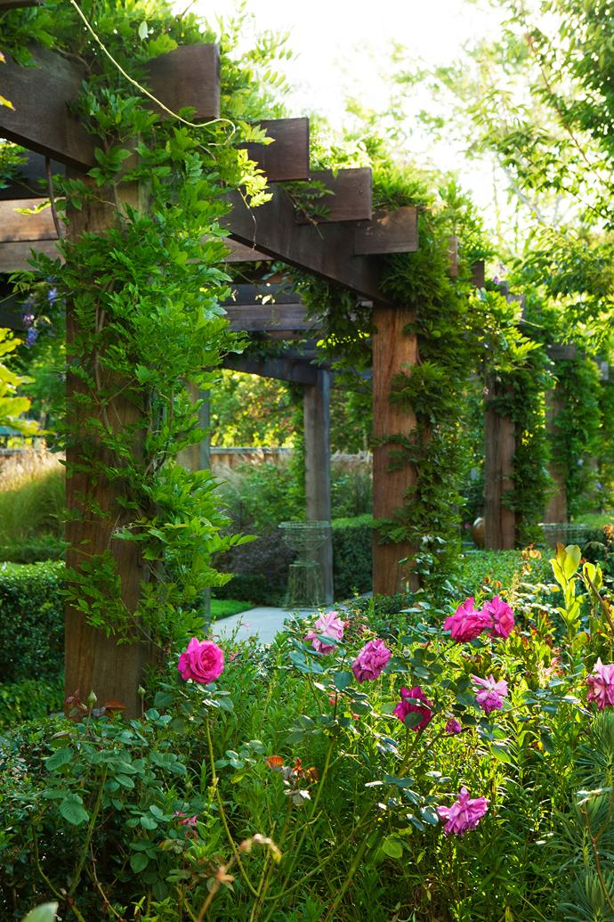 The wisteria-draped pergola is surrounded by *Rosa* 'Gertrude Jekyll' and liliums.