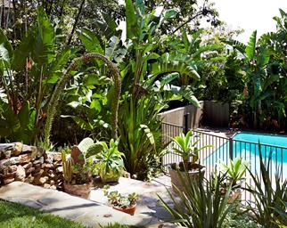 summer garden tips Australia