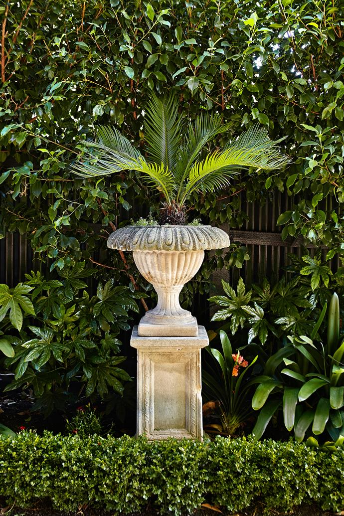 A stone plinth and urn planted with Japanese sago palm (*Cycas revolute*).