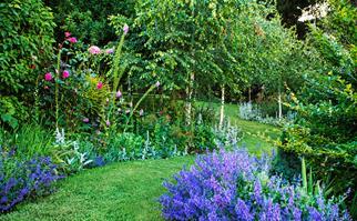 Formal Tasmanian garden