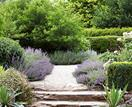 Summer gardening: what to plant in your garden in January