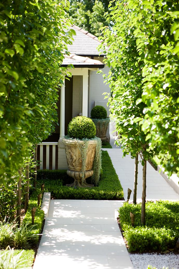 The straight trunks of pleached pear (*Pyrus 'Chanticleer'*) punctuate an expanse of white sandstone paving leading from the side of the house to the rear garden.