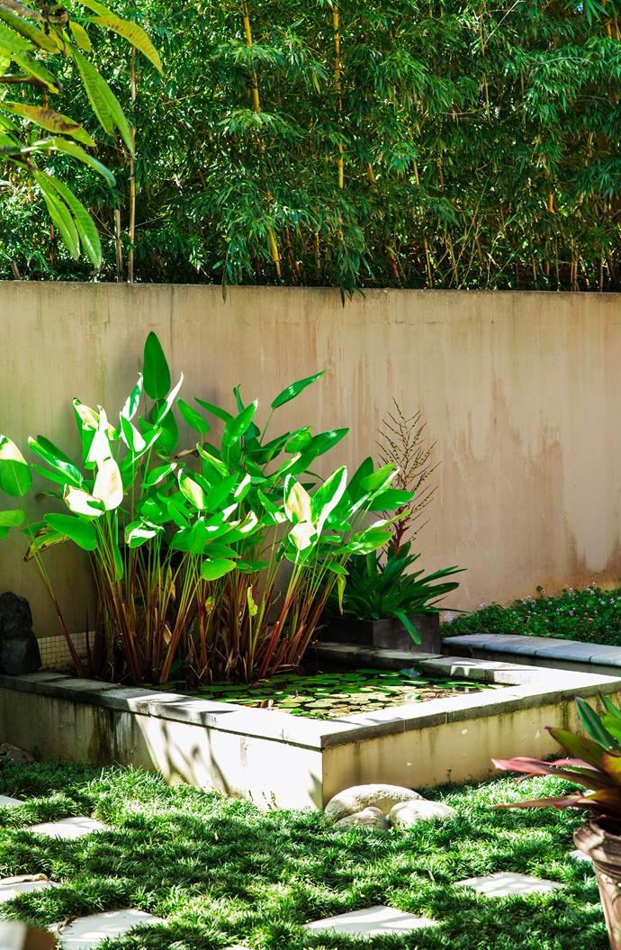 The courtyard's water feature is filled with *Thalia geniculata*, which is popular with local frogs.