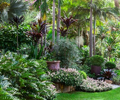A tropical oasis on the NSW north coast