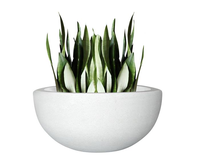 """Northcote pottery precinct lite omni **bowl** in white, $60, [Bunnings](http://www.bunnings.com.au/?utm_campaign=supplier/