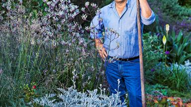Q&A with native plant aficionado Angus Stewart