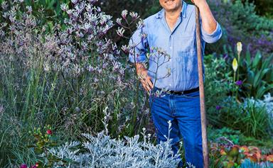Q&A with native plant aficionado Angus Stewart