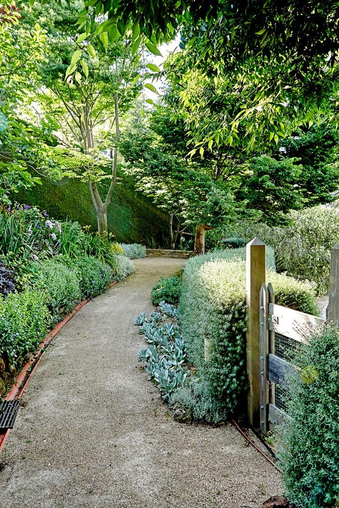 A gravel path is bordered by a Westringia fruticosa 'Wynyabbie Gem' hedge.