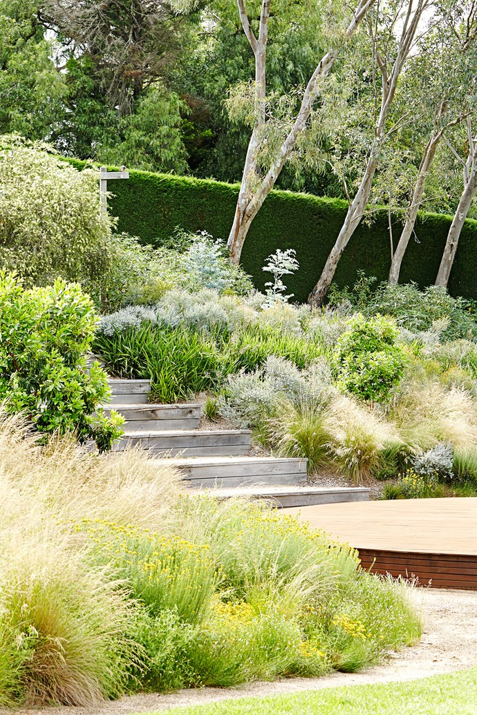In the dry garden, natives such as Poa labillardieri, Lomandra longifolia, and coppiced Eucalyptus latens 'Moon Lagoon' thrive.