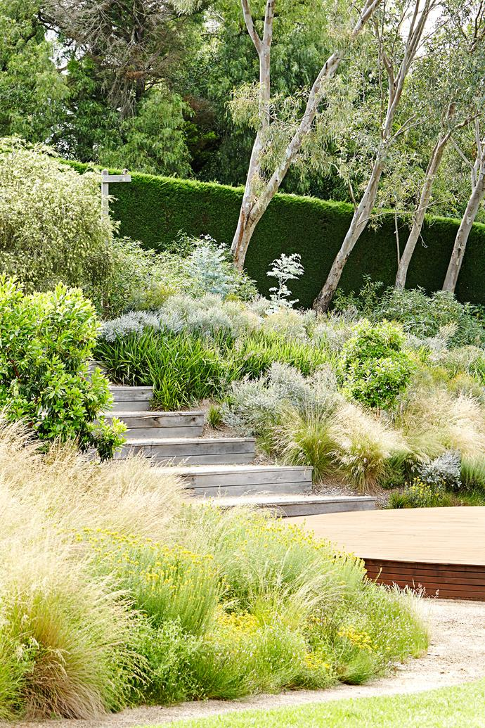 In the dry garden, natives such as Poa labillardieri, Lomandra longifolia, and coppiced Eucalyptus latens 'Moon Lagoon' thrive.