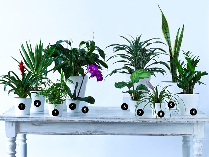 These house plants have serious stamina. Photo: Scott Hawkins/bauersyndication.com.au