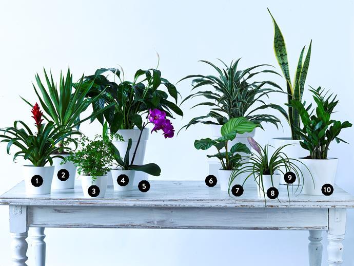 These house plants have serious stamina. Photo: Scott Hawkins/bauersyndication.com.au