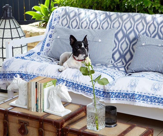 Creative ways to make your home pet friendly