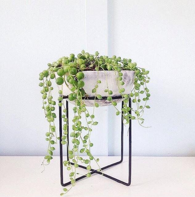 "Plant stand, $2, [Kmart](http://www.kmart.com.au/|target=""_blank""). Photo: [@stone.and.folk](https://www.instagram.com/stone.and.folk/|target=""_blank"")."