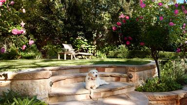How to pet-proof your garden