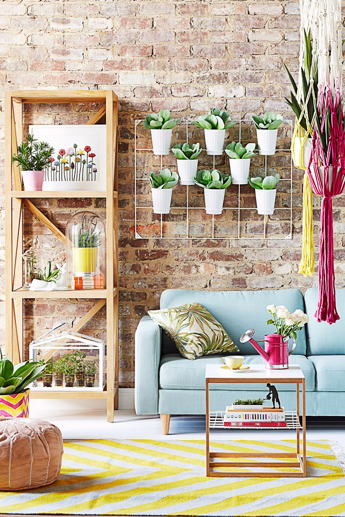 Time to up your indoor garden game. Photo: Sevak Babakhani / bauersyndication.com.au