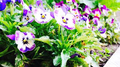 5 flowers to plant this February