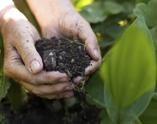 How to start a compost garden