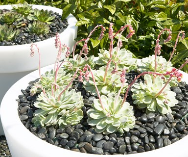 Expert tips: how to grow and care for succulents