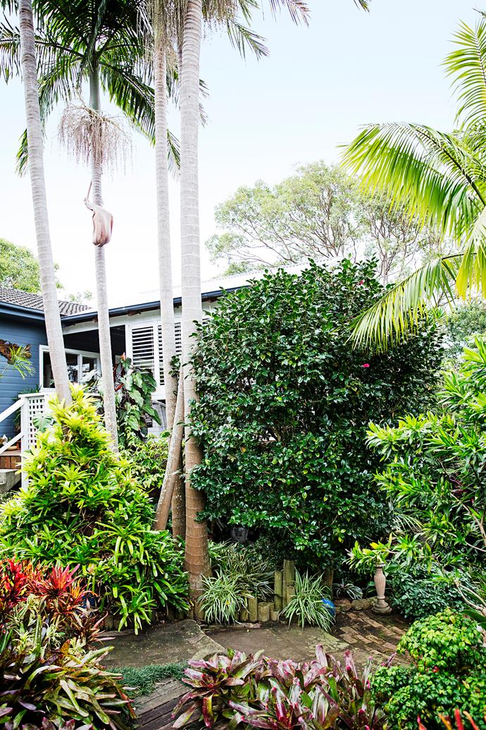 "Nestled amongst the dense foliage and mature palms is Di's pretty weatherboard cottage, which is painted in Dulux ""Drive Time""."