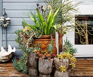 coastal garden ideas