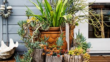 Tropical gardening by the beach