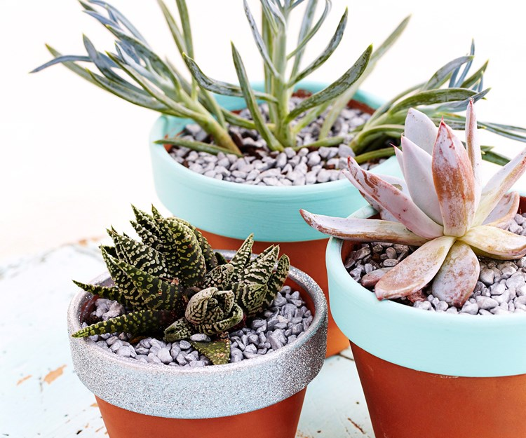 """[Get expert advice on how to grow and care for succulents here](http://www.homestolove.com.au/expert-tips-how-to-grow-and-care-for-succulents-2988 target=""""_blank""""). Photo: David Hahn"""