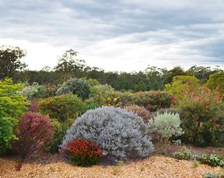 The best Australian Native plants