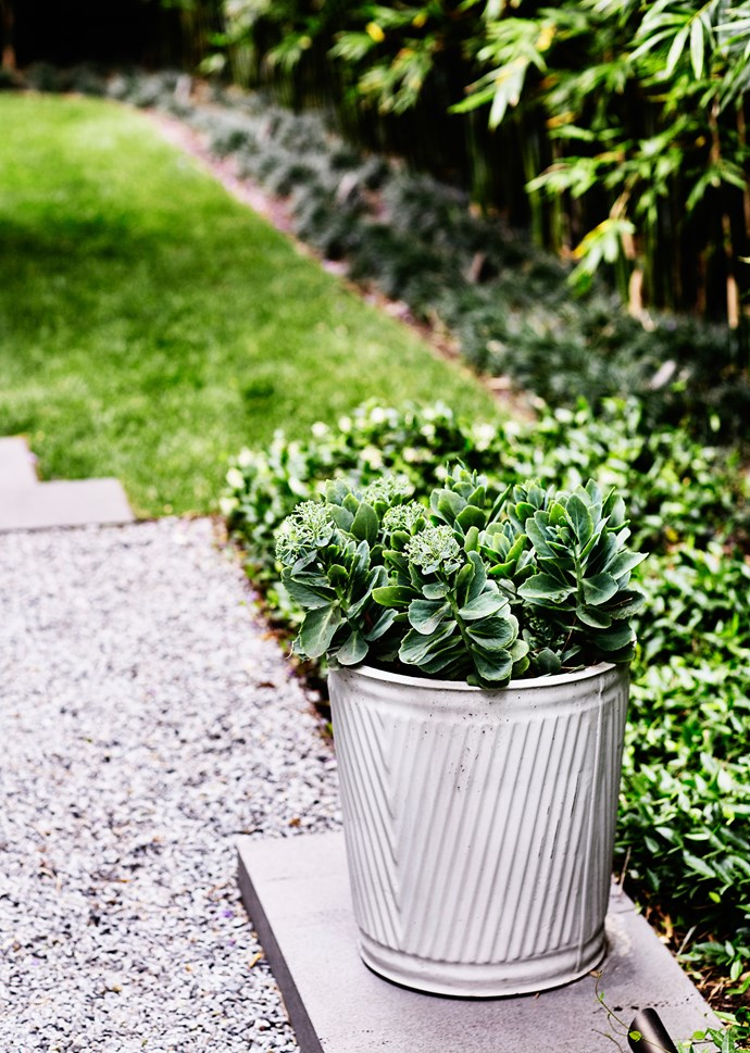 A concrete pot filled with *Sedum* sits on a bluestone plinth.